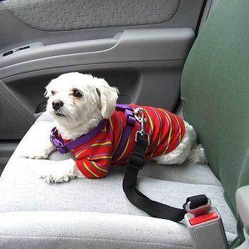 חגורת בטיחות לכלב מותאמת במיוחד לרכב, להגנה על חיית המחמד של...