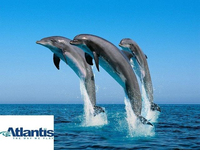 5 אטרקציות ימיות באילת - אבובים, סקי מים, צפיה בדולפינים, נהיגה בסירה מהירה ושנורקלים בחוף האלמוגים והכל ב- 99 ₪!!השובר תקף לשנה !!!